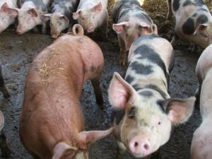 Myndighederne skal oplyse om alle MRSA-farme, vurderer ombudsmanden.