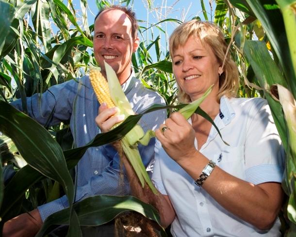 Gerhard Deneken, leder af statens GMO-forsøg på Tystofte og daværende fødevareminister Eva Kjer Hansen (V) i majsmarken med GMO-majs. 16. september 2009. Foto: Fødevareministeriet.
